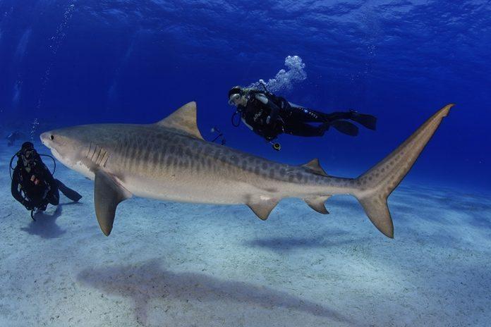 foto: Sharkschool