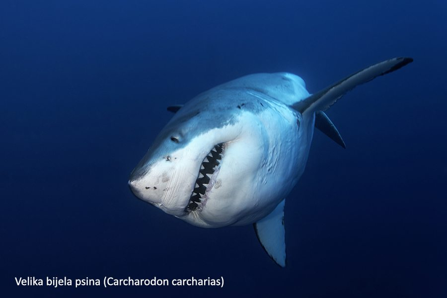 Stranica za upoznavanje s velikim brojem riba Australija